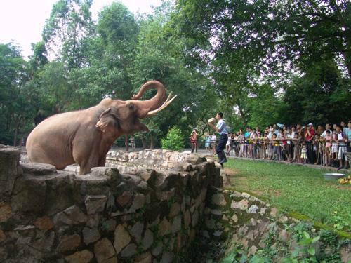 大象进食表演